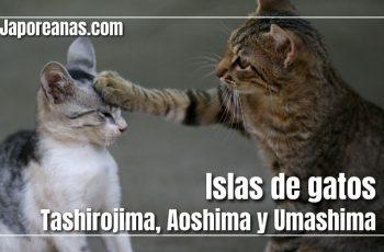 Isla de gatos